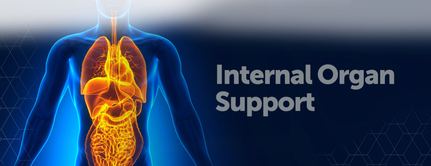 Internal Organs Support